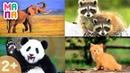 Развивающий мультик про животных Викторина для самых маленьких Учим слова Карточки Домана