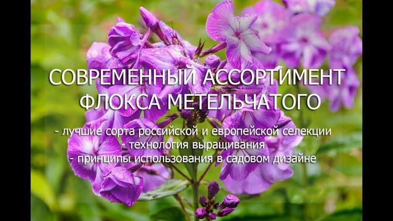 Вебинар Современный ассортимент флокса метельчатого