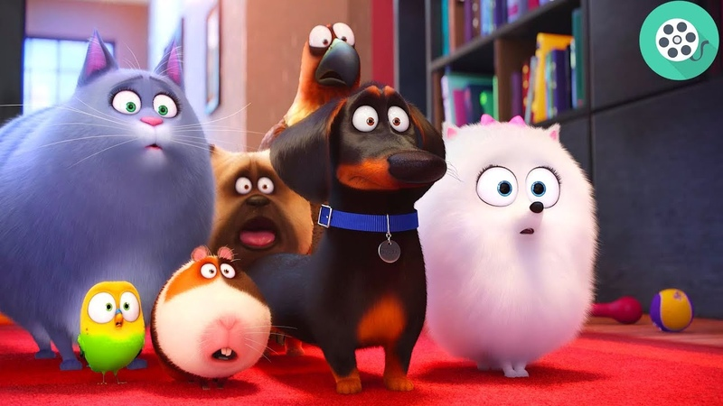 Друзья Макса приходят в дом бассет-хаунда Попса.Тайная жизнь домашних животных (2016) год.