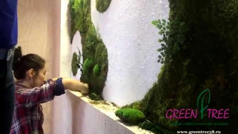 Фитостена Вертикальное озеленение стен стабилизированным мхом от GREEN TREE