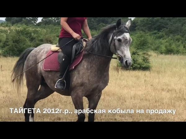 Продажа лошадей арабской породы конефермы Эквилайн тел WhatsApp 79883400208 кобыла Тайгета