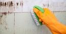 Народные средства борьбы с домашним грибком плесени
