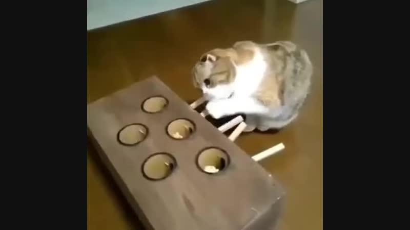 Целеустремленный кот
