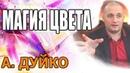 Цветовая магия одежда, цвет волос и т.д. Андрей Дуйко школа Кайлас