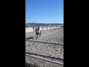 Манежная езда