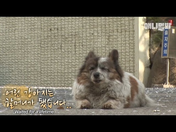 "나 지금도 여기 있어요..ㅣI'm still here.."" A puppy waited until she became a grandma"