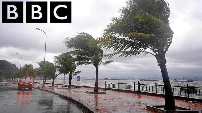 BBC - Остров Тайфунов - Мир природы - Документальный фильм