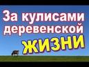 1001 ночь в деревне/Объективно о жизни в сказке