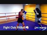 14.01.2019.Fight Club Pit bull