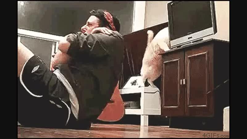 Кот помощник