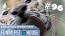 СМЕШНЫЕ ЖИВОТНЫЕ И ПИТОМЦЫ 96 АВГУСТ 2019 Funny Pet House