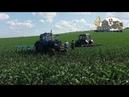 Культивация Междурядом с Mtz 82 Mtz1025 кукурудза,подсолнух/Row cultivation with Traktors Mtz82/1025