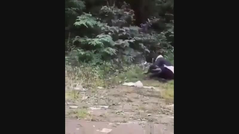 Девушка пьяная в хлам идет домой Видео прикол