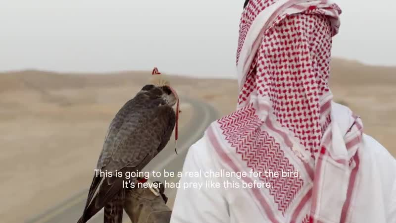 Vs. The peregrine falcon is the fastest animal in the world but how does this high-flyer fare against a world-renowned FormulaE