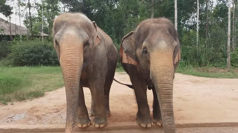 слоники в vinpearl safari