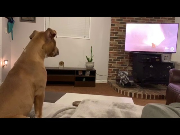 Empathetic Dog Reacts to Emotional Scene in The Lion King