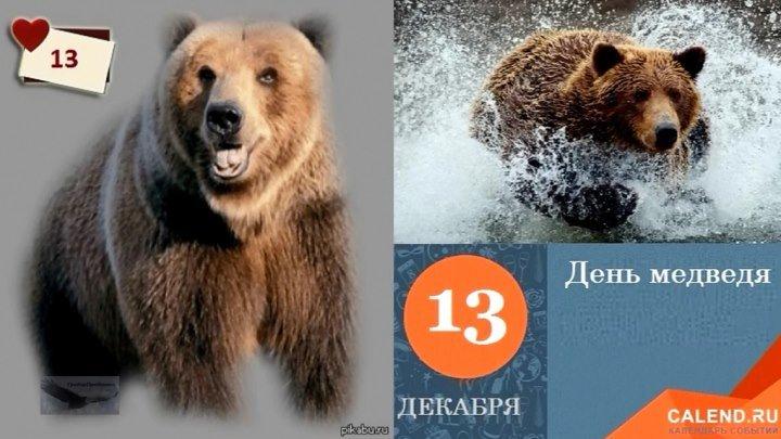 13 декабря День медведя