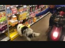 Service-dog in supermarket