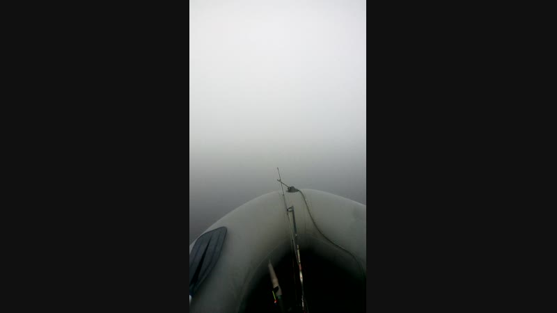 Жучка туман!