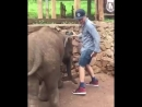 Слон дал пендаля чуваку