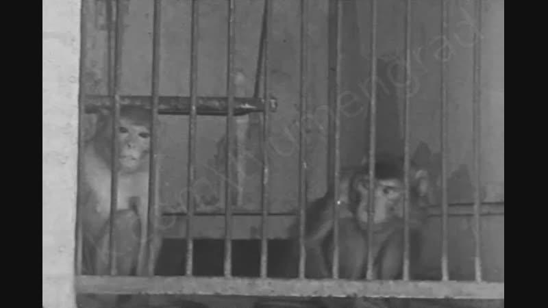 Передвижной зоопарк в Тюмени Середина 70 х