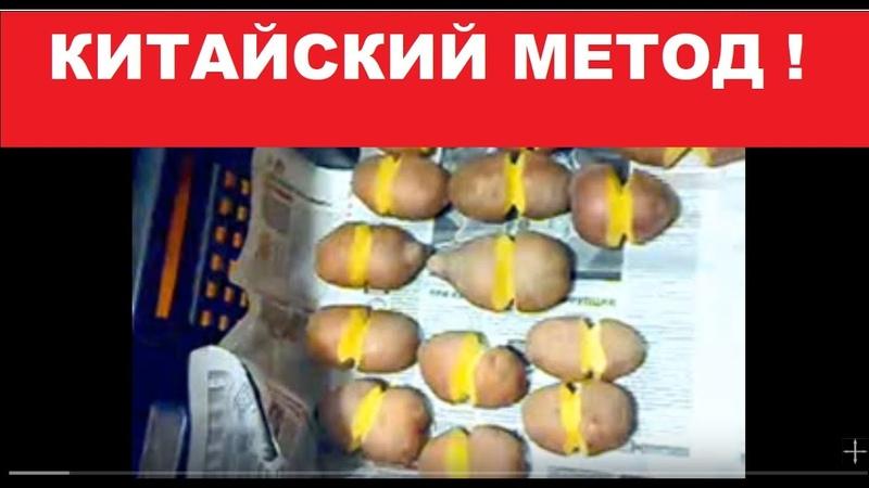 Картофель. Китайский МЕТОД. 2015 .