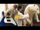 Top 10 Amazing Cake Decorating and Designing ★ Best Cake Workers 11