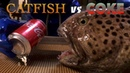 Catfish vs Coke