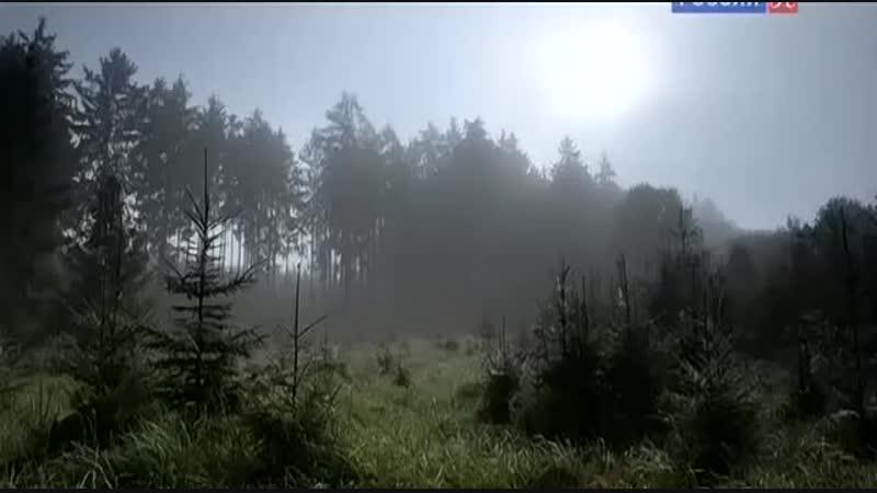 National Geographic Бурые медведи Карпатские леса и горы
