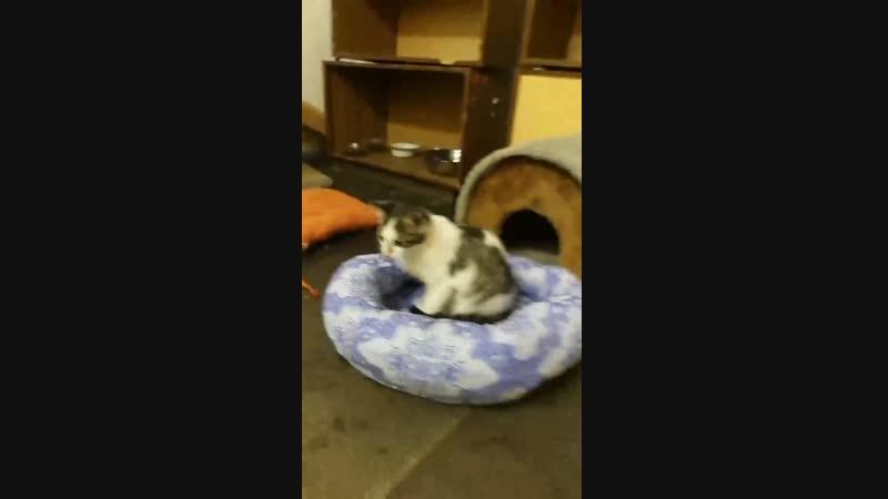 Котята приюта