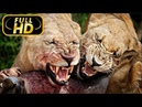 Africa's Hunters. The Misfit / FULL HD - Documentary Films on Amazing Animals TV