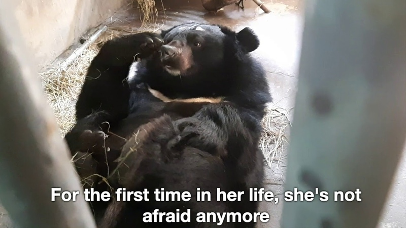 Moon bear Precious isn't afraid anymore