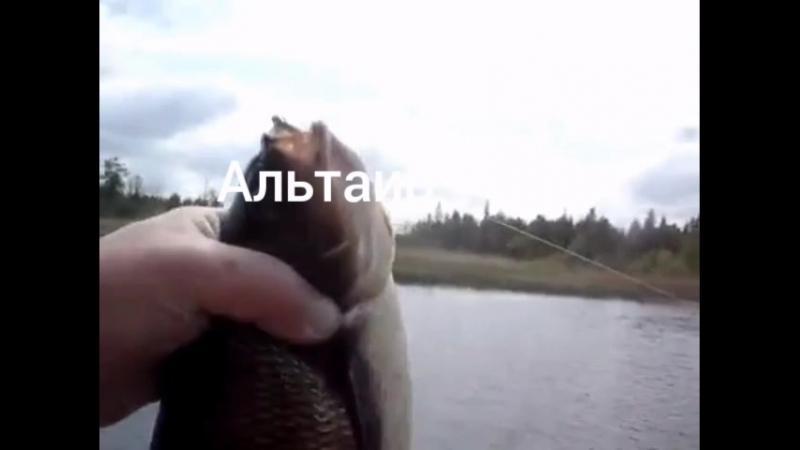 ВОТ ОН АССАСИН МОЕЙ МЕЧТЫ
