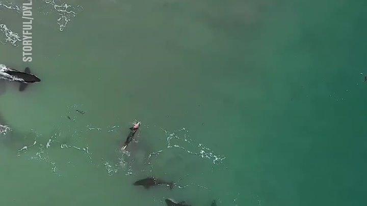 Стая касаток решила сопроводить женщину во время плавания 😱🐳