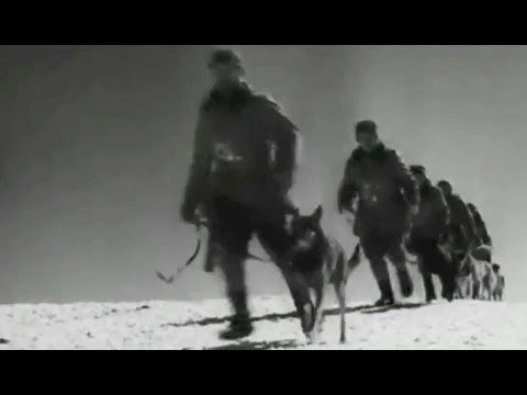 Dogs in WWII The Use of War Dogs 1943 War Department (US Army) K-9 Corps