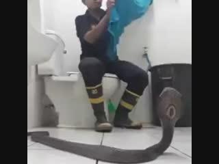Тайский пожарный показал, как укротить кобру