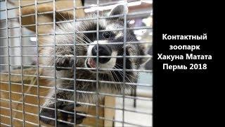 Контактный зоопарк Хакуна Матата Пермь 2018