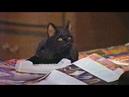 Сабрина маленькая ведьма | Все моменты с котом селем часть 3