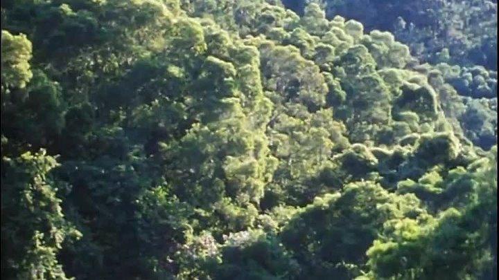 BBC Невидимая жизнь растений 5 Живущие вместе Документальный 1995