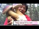 เห็ดผึ้งใหญ่ยักษ์ เยอะมากๆ!! ม่วนป่าแต 358