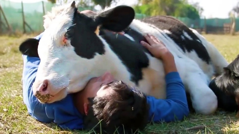 Animals Show Love for Humans - Animals Hugging People - Animals Cuddling