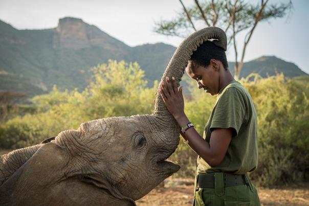 На севере Кении уже 3 года работает уникальный приют Ретети, в котором спасают и выхаживают осиротевших слонят Фото: Ami