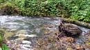 8 часов расслабляющих Звуков Природы Звуки Реки и Леса Пение птиц