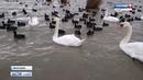 ВестиКрым Запрет стоянки на трассе у Лебединого озера под Евпаторией не уменьшает туристов