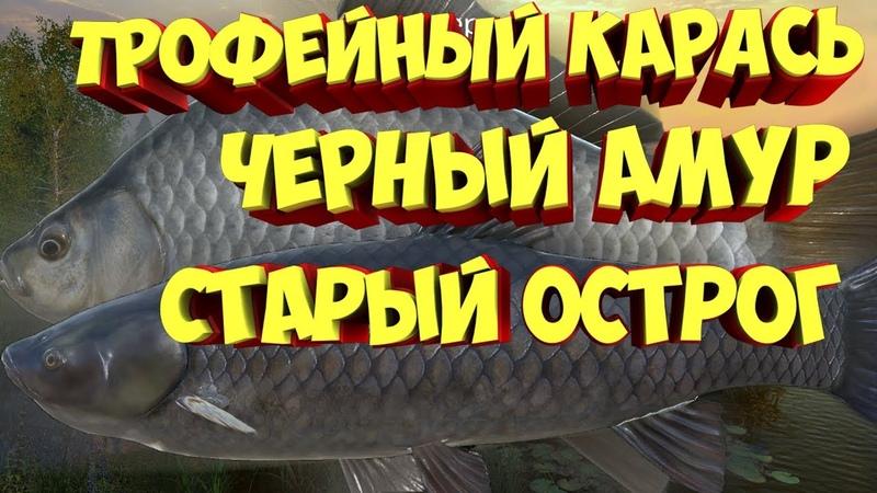 русская рыбалка 4 ТРОФЕЙНЫЙ КАРАСЬ ЧЁРНЫЙ АМУР Алексей Майоров russian fishing 4