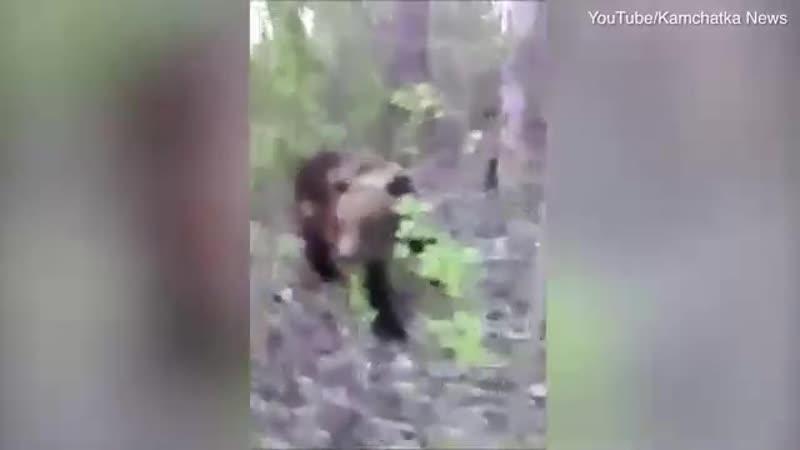 Волшебный пендаль медведю