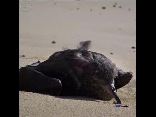 Что будет, если загрязнение Мирового океана пластиком продолжится
