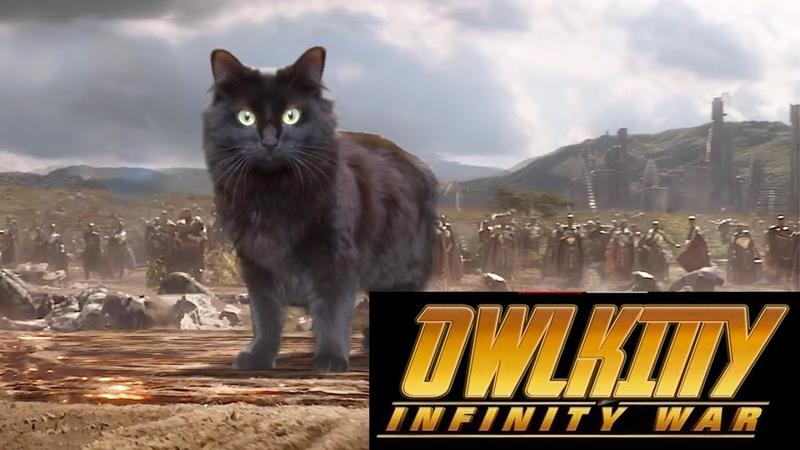 OwlKitty Infinity War