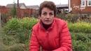 Как выращивать ремонтантную землянику Октябрьское чудо