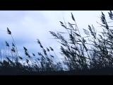 Белые птицы - Анатолий Першин